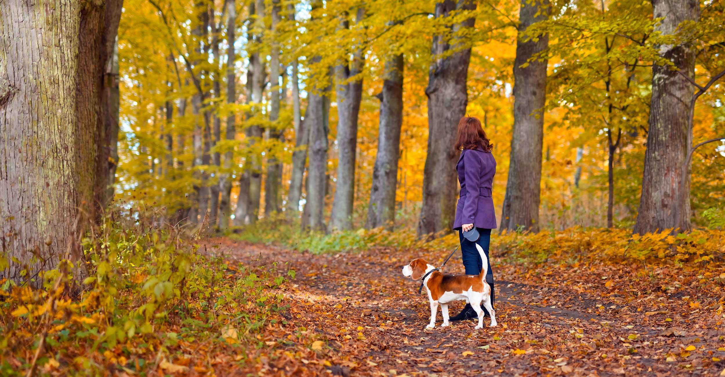 Kem-Mill_Dog-Walking-in-Astley-Park