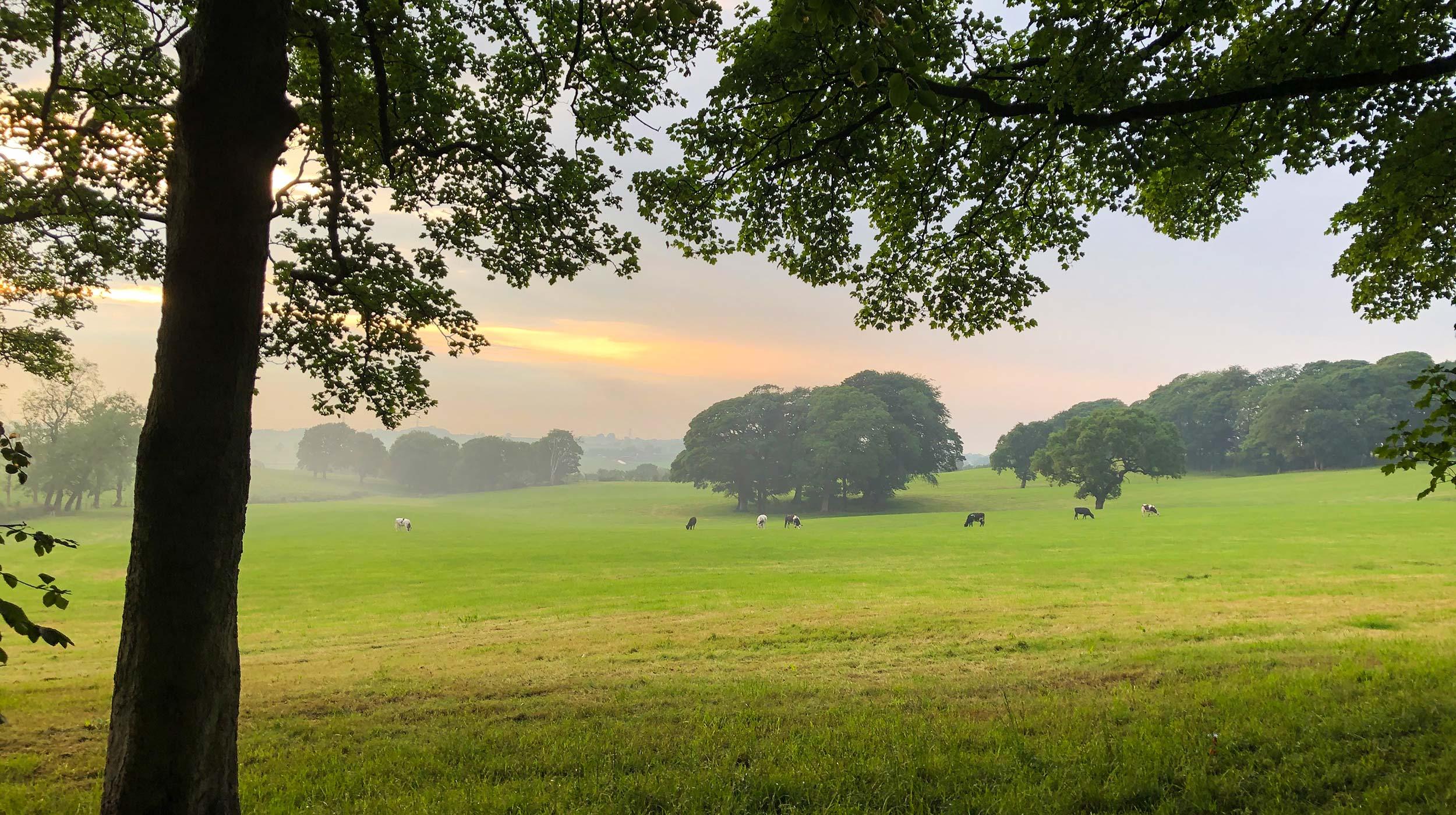 Wheelton-Pasture-web