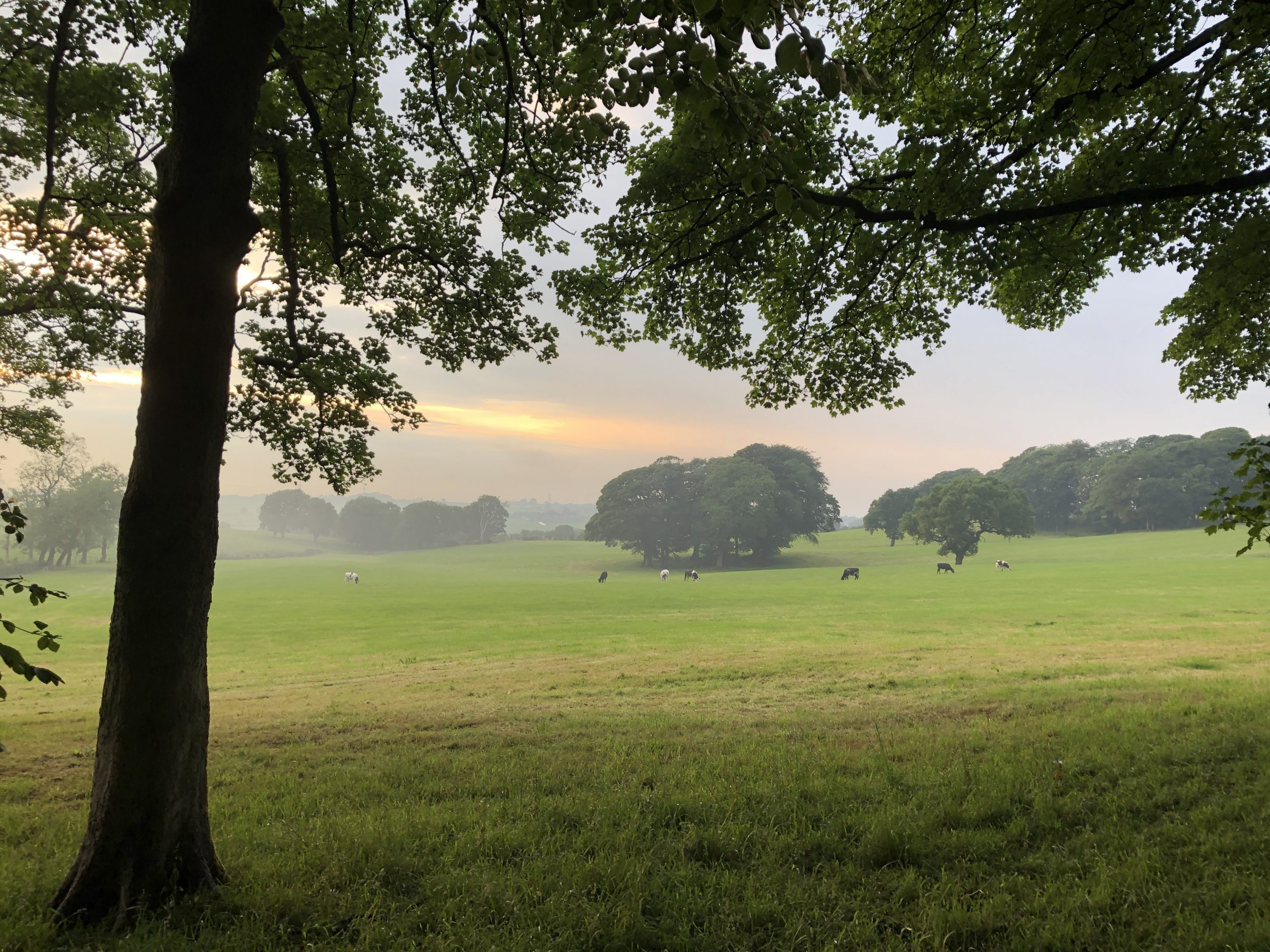Oak Vale_A Sense of Place_Carousel_3