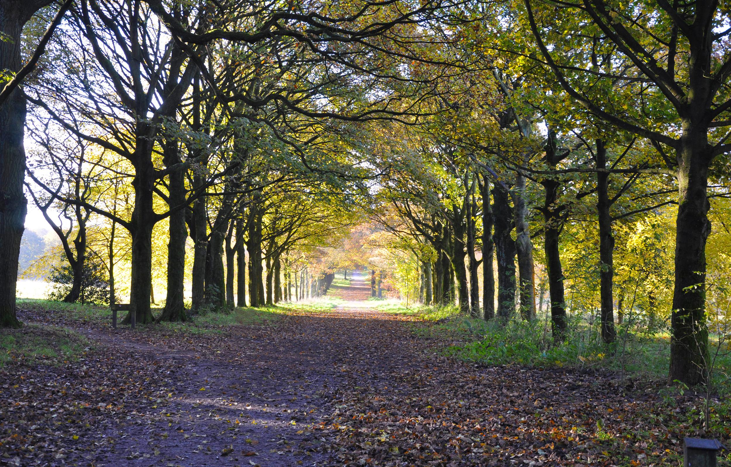 Oak Vale_A Sense of Place_Carousel_2